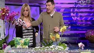 Amedeo Cetorelli ci spiega come curare le orchidee