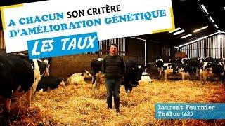 A chacun son critère d'amélioration génétique - Les Taux