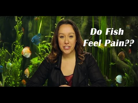 Do Fish Feel Pain? The Age Old Question!