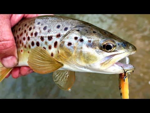 Trout Fishing Jackpot, A Fantastic Afternoon Fishing In A Small Stream