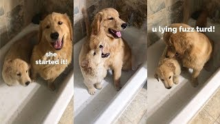 puppies-play-in-the-tub