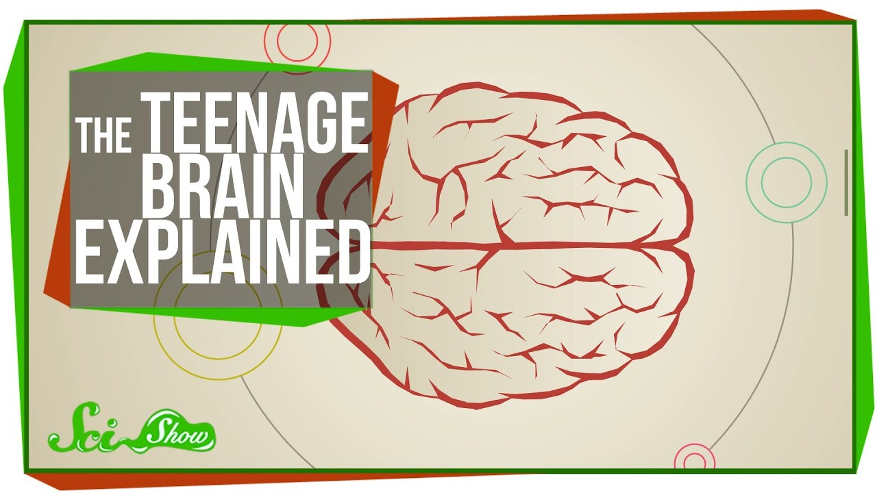 The Purpose Of Teenage Brain >> The Teenage Brain Explained Youtube