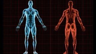 10 Useless Human Body Parts thumbnail
