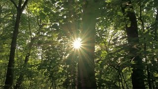 Sun Rays in the Green Forest 1 | Stock Footage