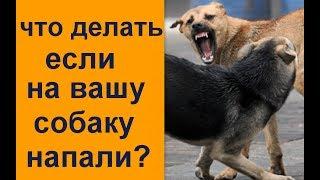 Что делать если на вашу собаку напали  разбор моей ситуации
