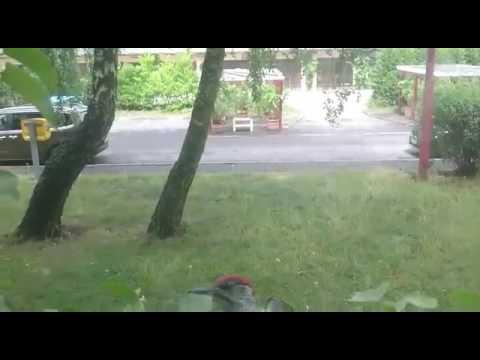 Дятел постучал в окно