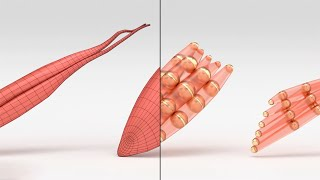 Muscle Simulation...Now In Real Time!