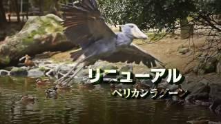 2017年5/3~7の期間中、神戸どうぶつ王国 では、夜9時までナイトZOO「ア...