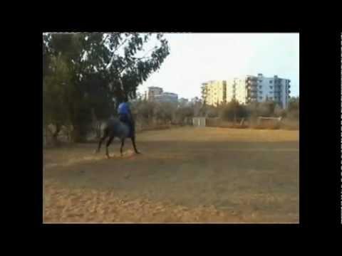 Michael Horse Ride.avi