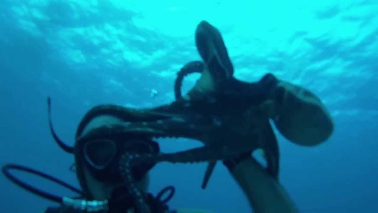 самый большой осьминог в мире фото