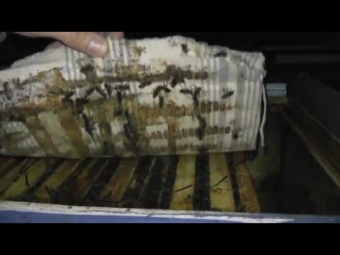 зимовка на подсолнечниковом мёде