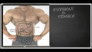 Как работает протеин (VitaShop.com.ua)