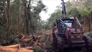 Exploração Florestal nos Açores.