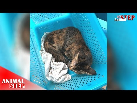Saving a Stray Cat with Spinal Injury and Gives Her Second Chance at Life
