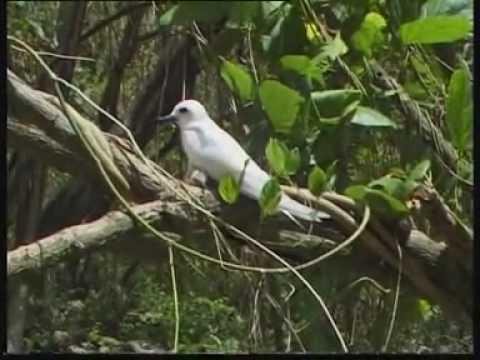 Seychelles croisieres à la voile