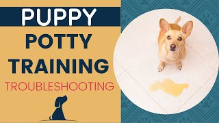 New Puppy Potty Training - Troubleshooting Housebreaking Dilemmas