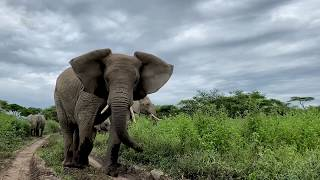The start of your journey, Serengeti at home!