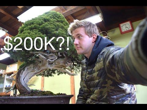 VLOG #9 - $200K BONSAI?!
