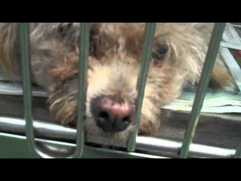 A Few Faces Facing Death at Miami Dade Animal Services Kill Shelter