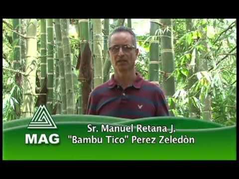 Producción de Bambú en Costa Rica