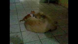 Amizade entre Cadela e Gatinho
