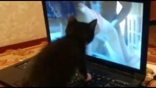 Котенок любит эротику