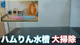 【ゴールデンハムスター】ハムりんの 週に一度の水槽の大掃除動画をアッ...