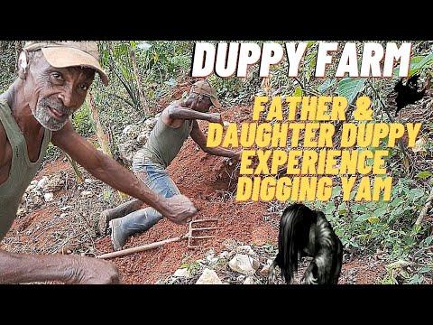 DUPPY FARM IN JAMAICA| FARMER FARMING FOR OVER 60 YRS HAS DUPPY ON HIS FARM| DIGGING YAM IN JAMAICA