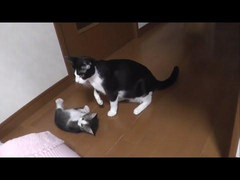 教育熱心な母猫に何故か怒られる子猫