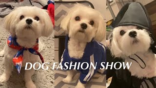 Dog Fashion Show | Maltese Edition