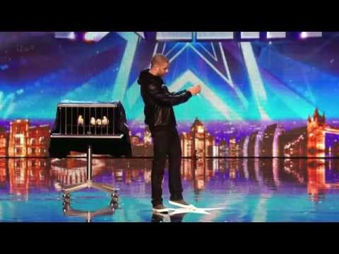 Britains Got Talent S08 E02 Magician hides 6 birds and a girl