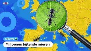 Nieuwe insectenplaag in Nederland: het draaigatje