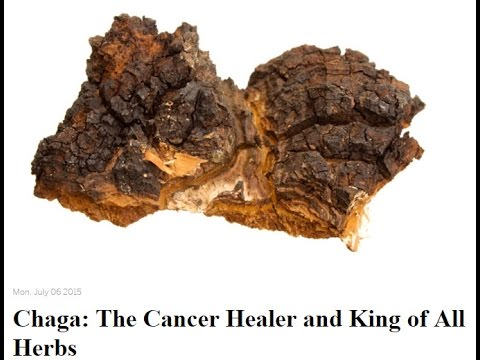 Chaga The Cancer Healer and King of All Herbs