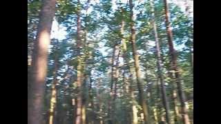 Male deer growl 2 [Ryk (odgłos-szczekanie) Kozła 2 - samca sarny]