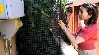 How To: Urban Vegetable Gardening #5 - Fencing