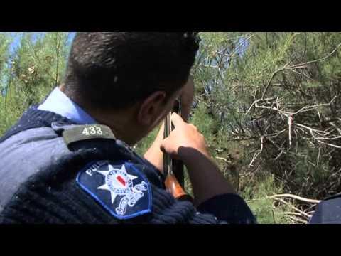 Birds, Bins & Bullets Pt 6 -  Police Recover Hidden Guns
