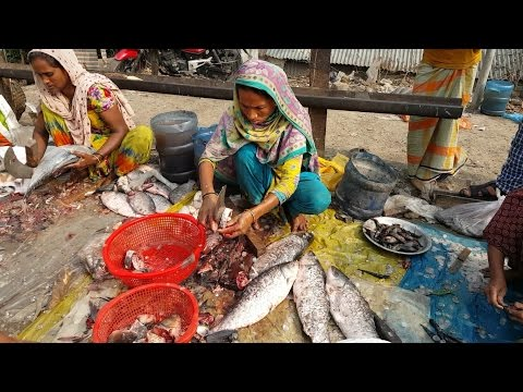 Huge Fish Cut Into Pices By Woman Fish Slice Worker in Fish market Bangladesh