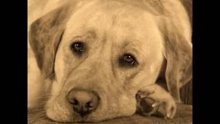 Не обижайте собак! Они нас любят!