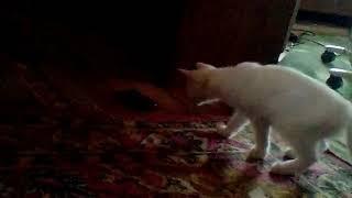 Котята первый раз видят как звенит телефон