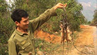 Bẫy Chuột Rừng Khủng || TVN Lai Châu