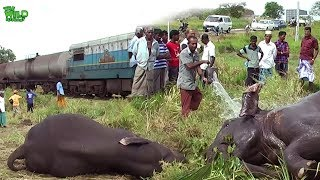 Humanity! Helping an injured Elephant before help arrives