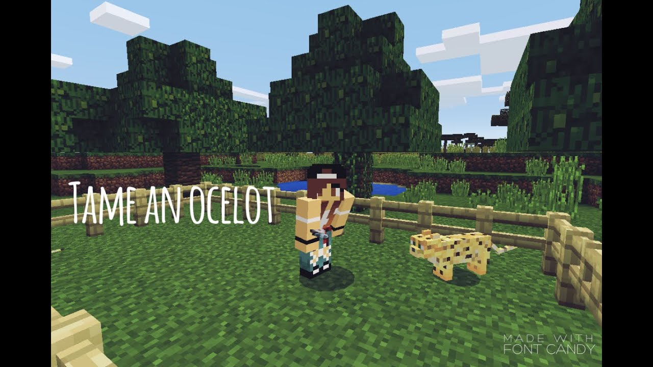 How to tame an Ocelot- Minecraft PE