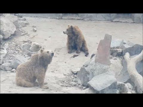 Yerevan Zoo, Yerevan, Armenia (2/2) / Ереванский зоопарк, Ереван, Армения (2/2)