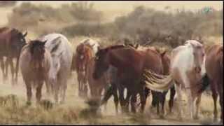 Mustang guerreros