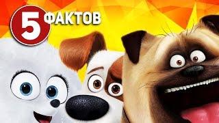 Тайная жизнь домашних животных - ТОП 5 фактов о мультфильме
