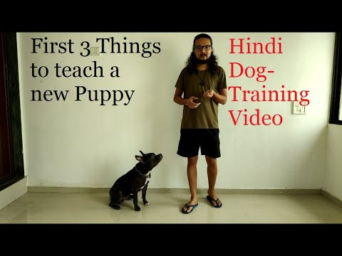 Dog Training in Hindi | 3 Things To Teach a New Puppy