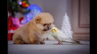 PARROTS Trying To Befriend PUPPIES - Cute Puppy And Funny Parrot Videos Compilation 2018 [BEST OF]