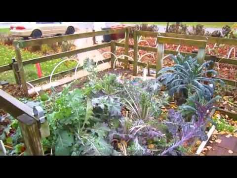 Drying Kale   Wisconsin Garden Video Blog 473