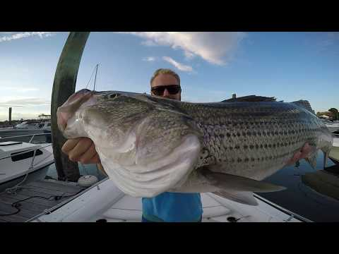 Striper Fishing - Boston Harbor