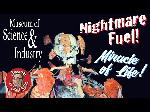 The Museum Of Science And Industry - Amazingly Wonderful And Traumatizing Exhibits